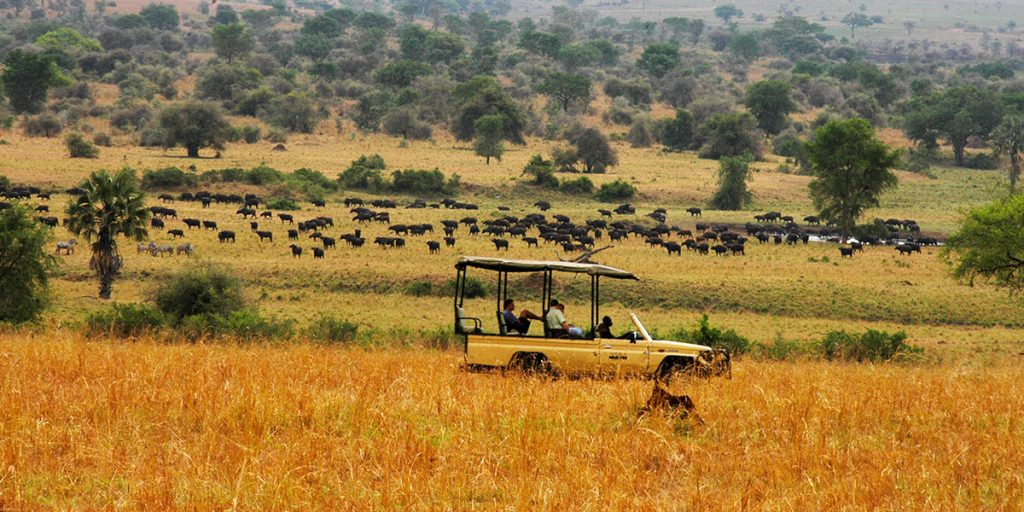 8 Days Big Five Safari in Murchison Falls