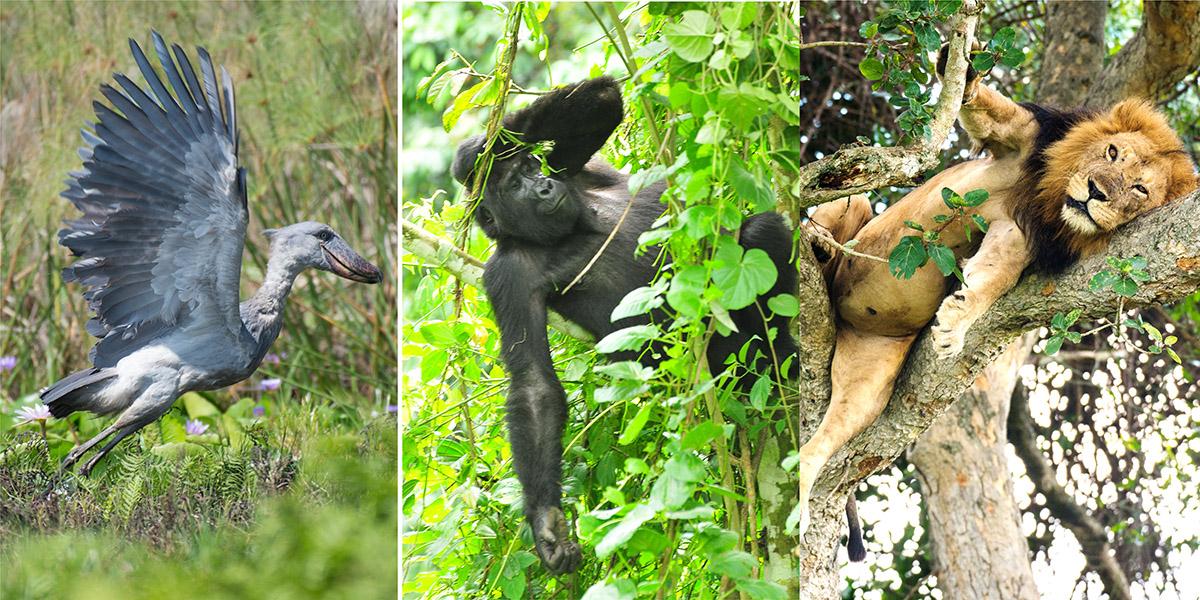 national-parks-in-uganda